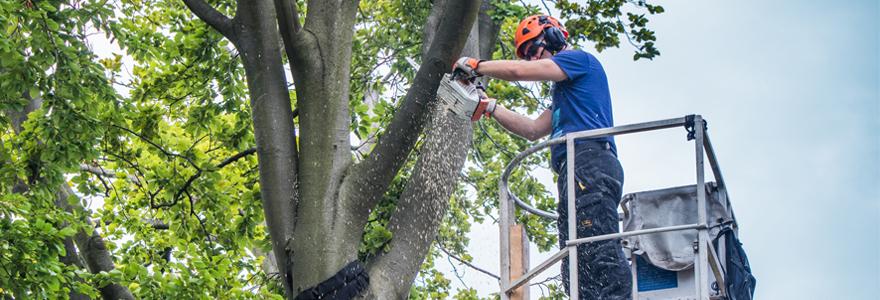 élagage de vos arbres