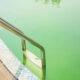 piscine devient verte